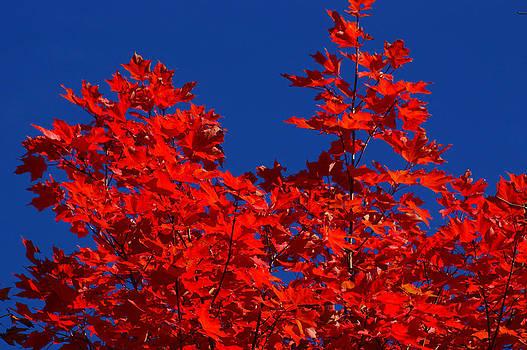Red on Blue by Jann Kline