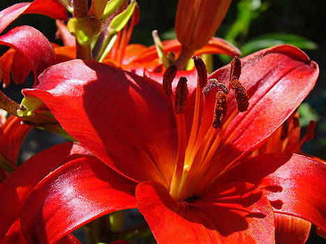 Baslee Troutman - Red Orange Lily Flowers Art Prints