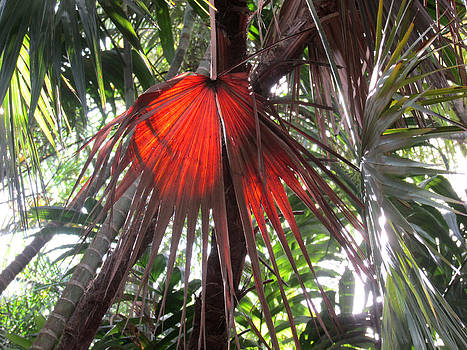 Red Palm by Rosie Brown