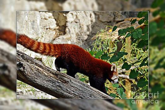 Walter Herrit - Red Panda 2