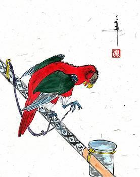 LINDA SMITH - Red Parakeet