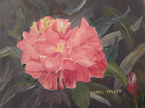 Red Peony Radiance by Carol L Miller