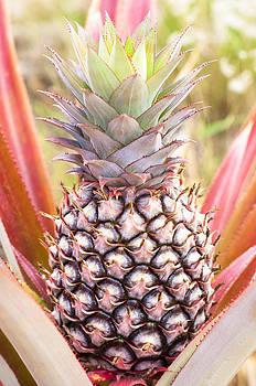 Ramunas Bruzas - Red Pineapple