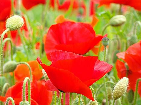 Baslee Troutman - Red Poppy Flowers Art Prints Floral