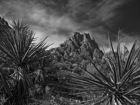 Red Rock BW by Guillermo Rodriguez