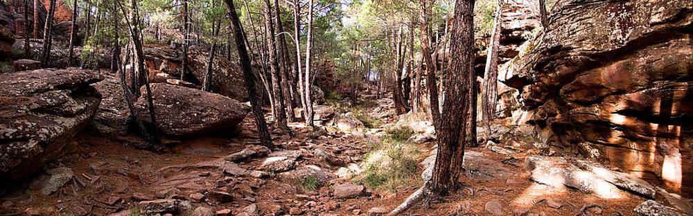Weston Westmoreland - Red Rock Pine Forest