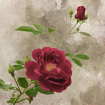 Michael Peychich - Red Rose 4510