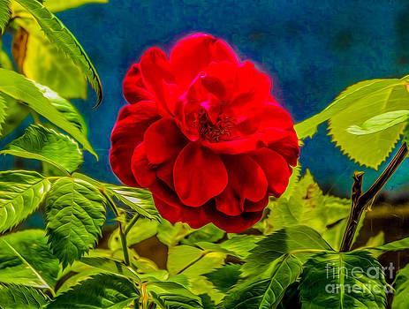 Algirdas Lukas - Red Rose