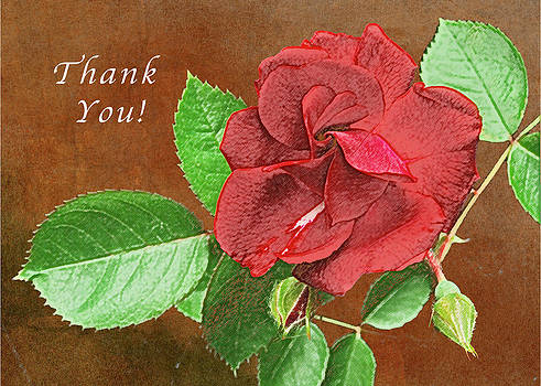 Michael Peychich - Red Rose Autumn Texture Thank-you