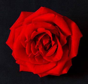Bonnie Davidson - Red Rose