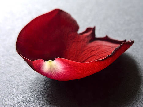 Red Rose Flower Petals Abstract I - Closeup Flower Photograph by Artecco Fine Art Photography