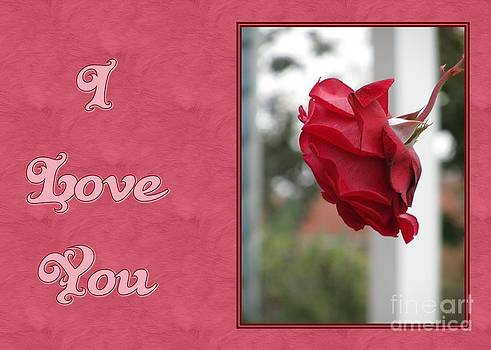 JH Designs - Red Rose I Love You