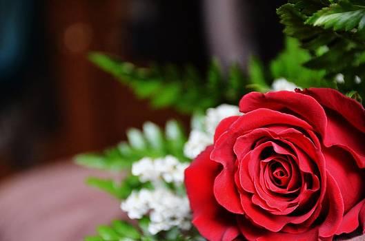 Red Rose by Jennifer Wartsky