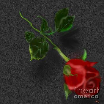 Red Rose by Mahnaz Ahmed