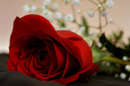 Red Rose by Michelle Cawthon
