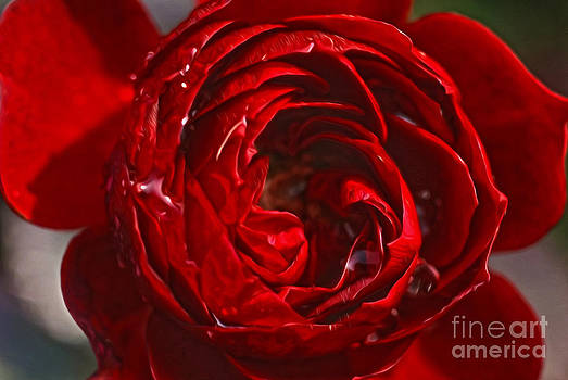 Red Rose by Nur Roy