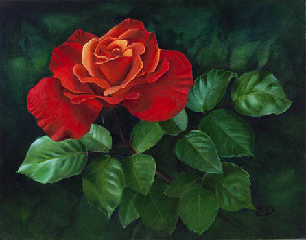 Red Rose - oil painting on canvas by Elena Polozova
