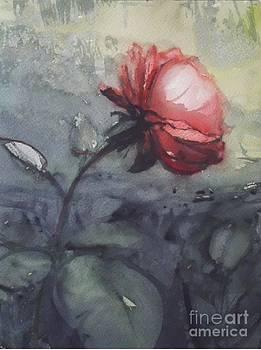Red Rose by Paez De Pruna