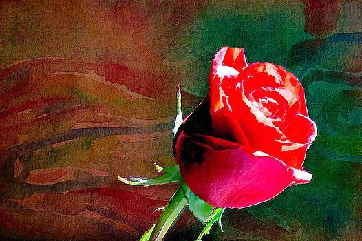 Red Rose by Saibal Ghosh