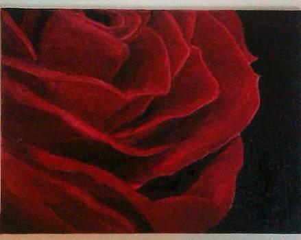Red Rose by Sanjana Rajashekar