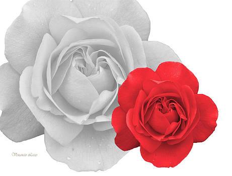 Red Rose by Venancio Lasso