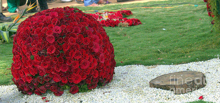 Red Roses by R J