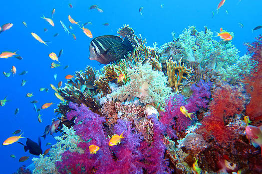 Red Sea Colours by Laura Hiesinger