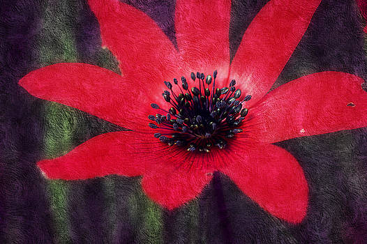 Red Shimmers by Melanie Lankford Photography