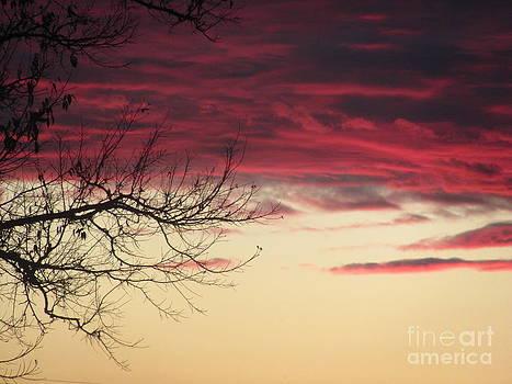Red Skies by Michele Bishop