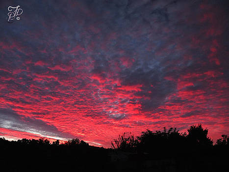 Red sky in the morning by Raewyn Forbes