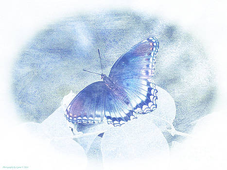 Gena Weiser - Red Spotted Purple Butterfly - Pastel