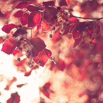 Red Spring by Patrick Horgan