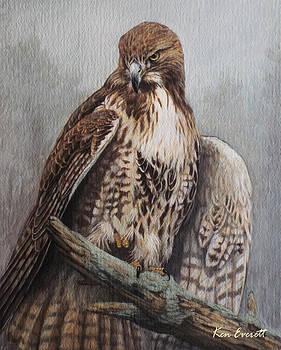 Red Tail Hawk by Ken Everett