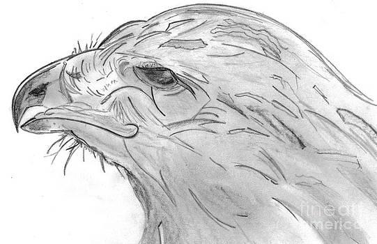 Red-Tailed Hawk Drawing by Elizabeth Briggs