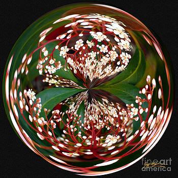 Jeff McJunkin - Red Tip Orb I