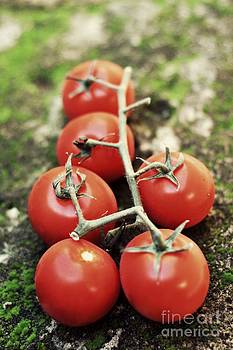 Red tomato by Bobby Mandal