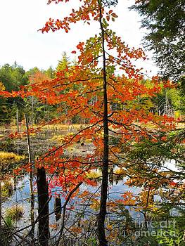 Red Tree at Waters Edge by Linda Marcille