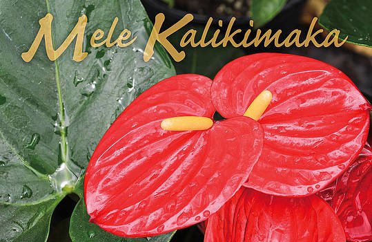 Red Tropical Anthuriums by Denise Bird