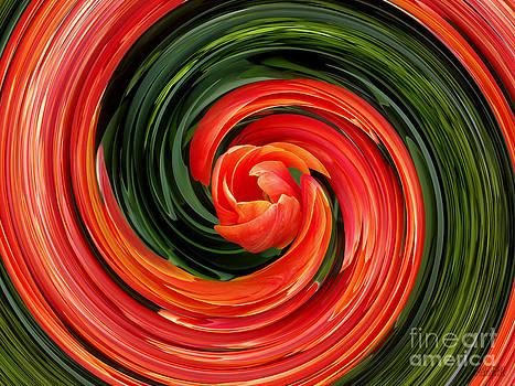 Red Tulip by Hanza Turgul