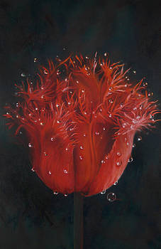 Red Tulip by Lynette Yencho