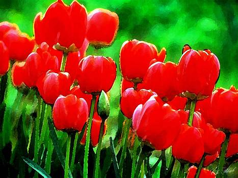 Red Tulips  by Cole Black