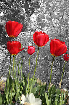 Red Tulips Digital Painting by Heinz G Mielke