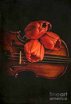 Edward Fielding - Red tulips on a violin