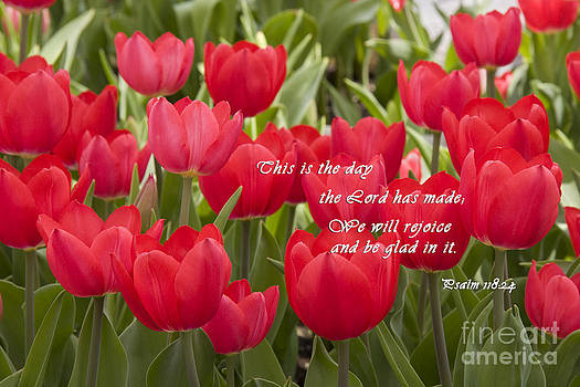 Jill Lang - Red Tulips with Scripture