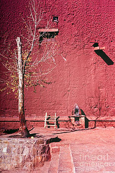 Tim Hester - Red Wall Tree