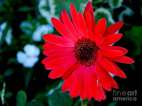 Red Welcome by Christy Phillips