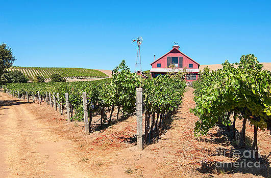 Jamie Pham - Red Wine Barn - Beautiful view of wine vineyards and a Red Barn in Napa Valley.