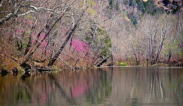 RedBud Reflection Downstream by Larry Bodinson