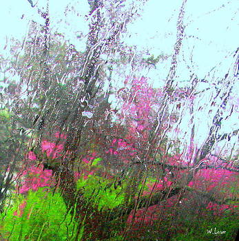 Redbud Trees by Wendell Lowe