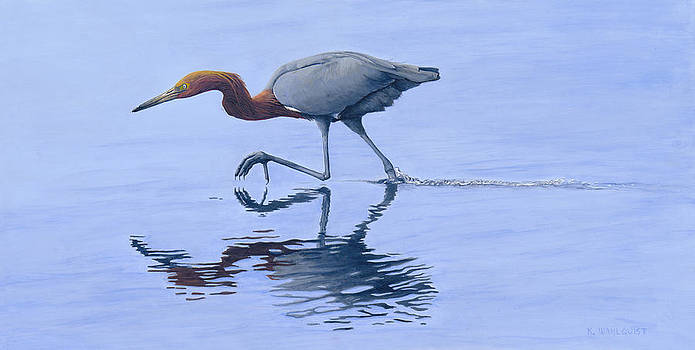 Reddish Egret by Kirsten Wahlquist